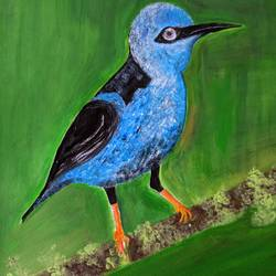 beauty of bird, 16 x 12 inch, promila singh,16x12inch,thick paper,paintings,still life paintings,paintings for school,acrylic color,GAL0823235178