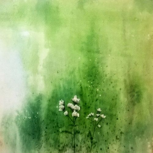 wild flowers, 22 x 15 inch, bhanupratap khare,abstract paintings,paintings for living room,handmade paper,watercolor,22x15inch,GAL012963538