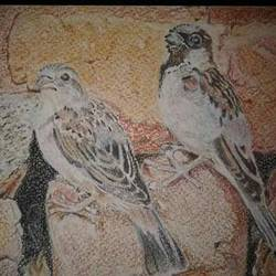 home sparrow, 6 x 4 inch, parul srivastava,realism drawings,paintings for living room,animal paintings,rice paper,charcoal,6x4inch,GAL012893566