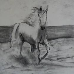 at beach, 12 x 17 inch, arpana d,fine art drawings,paintings for living room,animal paintings,paper,charcoal,12x17inch,GAL09643567