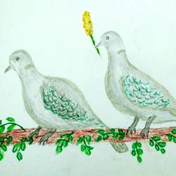 punjabi bird series-love birds doves, 12 x 9 inch, r meet,12x9inch,ivory sheet,paintings,nature paintings | scenery paintings,ink color,pencil color,GAL0488335927