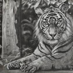 the ferocious, 15 x 14 inch, akila devi,15x14inch,brustro watercolor paper,paintings,wildlife paintings,nature paintings | scenery paintings,photorealism paintings,photorealism,realism paintings,animal paintings,realistic paintings,paintings for dining room,paintings for living room,paintings for bedroom,paintings for office,paintings for bathroom,paintings for kids room,paintings for hotel,paintings for kitchen,paintings for school,photorealism drawings,realism drawings,paintings for dining room,paintings for living room,paintings for bedroom,paintings for office,paintings for bathroom,paintings for kids room,paintings for hotel,paintings for kitchen,paintings for school,charcoal,GAL01944835971