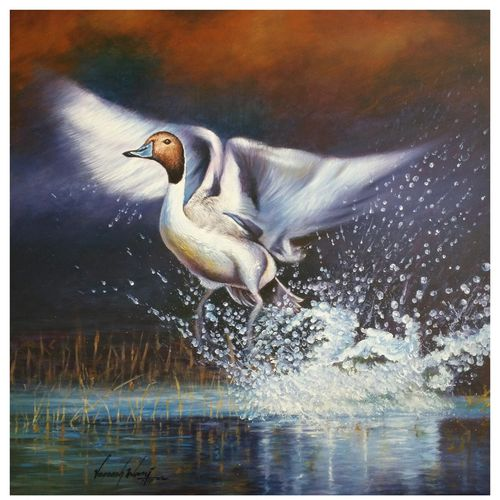 flying duck, 20 x 20 inch, veeresh  wani,wildlife paintings,paintings for living room,animal paintings,canvas,acrylic color,20x20inch,GAL013083598