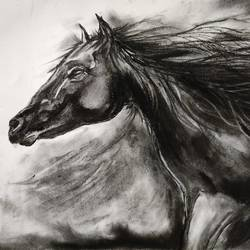 horse, 15 x 11 inch, shankhadeep  mondal,15x11inch,thick paper,drawings,modern drawings,paintings for dining room,paintings for living room,paintings for bedroom,paintings for office,paintings for kids room,paintings for hotel,paintings for kitchen,paintings for school,paintings for hospital,charcoal,GAL01403036002
