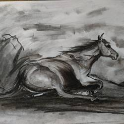 horse, 11 x 8 inch, shankhadeep  mondal,11x8inch,thick paper,drawings,modern drawings,paintings for dining room,paintings for living room,paintings for bedroom,paintings for office,paintings for kids room,paintings for hotel,paintings for kitchen,paintings for school,paintings for hospital,charcoal,GAL01403036004