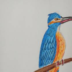 kingfisher, 8 x 12 inch, pavan pai,8x12inch,drawing paper,animal paintings,oil color,GAL02465336053
