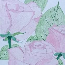 pink roses, 9 x 11 inch, mrs. kalyani lahon,fine art drawings,paintings for living room,flower paintings,thick paper,pencil color,9x11inch,GAL06573606