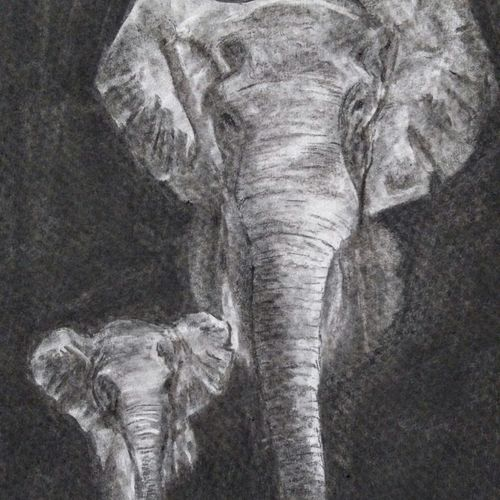 on the path, 12 x 17 inch, arpana d,fine art drawings,paintings for living room,wildlife paintings,animal paintings,paper,charcoal,12x17inch,GAL09643608