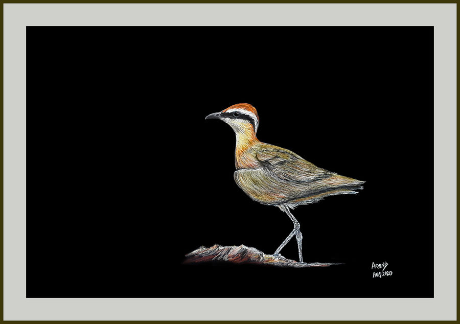 Digital reprint of a sketch in colour pencils of a courser