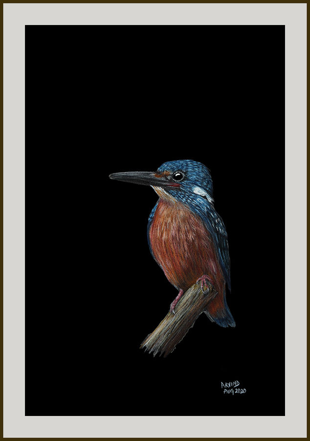 digital reprint of a sketch in colour pencils of a 'blue earred kingfisher', 12 x 18 inch, arvind patole,12x18inch,thick paper,drawings,art deco drawings,fine art drawings,photorealism drawings,realism drawings,paintings for dining room,paintings for living room,paintings for bedroom,paintings for office,paintings for kids room,paintings for hotel,paintings for school,paintings for hospital,pencil color,paper,GAL02469036107