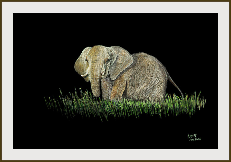Digital reprint of a sketch in colour pencils of a african elephant