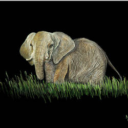 digital reprint of a sketch in colour pencils of a 'african elephant', 18 x 12 inch, arvind patole,18x12inch,thick paper,paintings for dining room,paintings for living room,paintings for bedroom,paintings for office,paintings for kids room,paintings for hotel,paintings for school,paintings for hospital,art deco drawings,fine art drawings,paintings for dining room,paintings for living room,paintings for bedroom,paintings for office,paintings for kids room,paintings for hotel,paintings for school,paintings for hospital,pencil color,paper,GAL02469036114