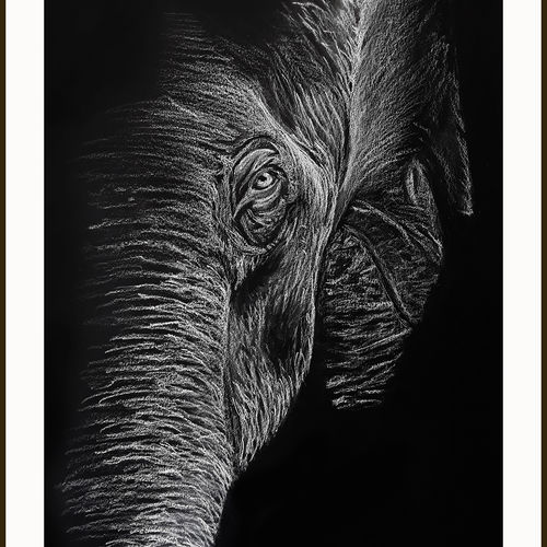 digital reprint of a sketch in colour pencils of a ' elephant', 12 x 18 inch, arvind patole,12x18inch,thick paper,drawings,art deco drawings,fine art drawings,paintings for dining room,paintings for living room,paintings for bedroom,paintings for office,paintings for kids room,paintings for hotel,paintings for school,paintings for hospital,pencil color,paper,GAL02469036115