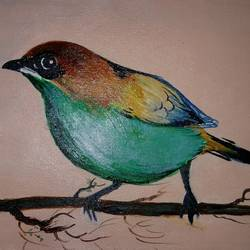 bird northern parula, 13 x 8 inch, popo singh,abstract paintings,paintings for living room,canvas,stone color,13x8inch,GAL013293631