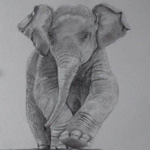 baby elephant, 12 x 17 inch, arpana d,fine art drawings,paintings for living room,paper,charcoal,12x17inch,GAL09643636