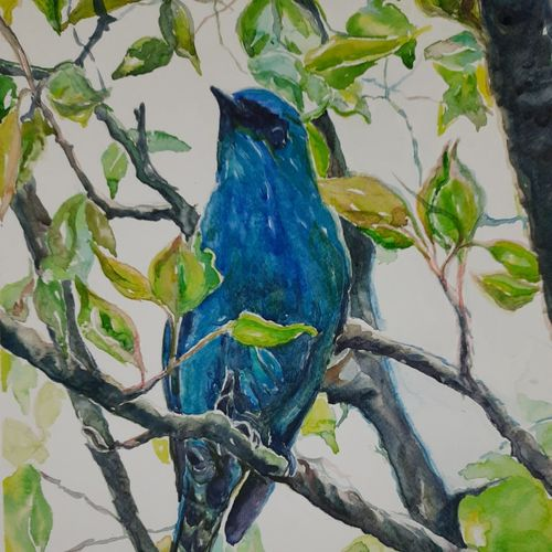 vibrant birds : veriditer fly catcher, 12 x 17 inch, vaishali singh,12x17inch,thick paper,paintings,wildlife paintings,animal paintings,paintings for dining room,paintings for living room,paintings for bedroom,paintings for office,paintings for hotel,watercolor,GAL02492636414