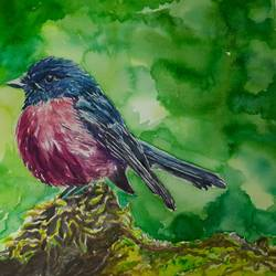 australian pink robin, 12 x 17 inch, vaishali singh,12x17inch,thick paper,paintings,wildlife paintings,animal paintings,paintings for dining room,paintings for living room,paintings for bedroom,paintings for office,paintings for hotel,watercolor,GAL02492636453