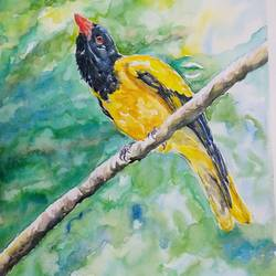 vibrant birds : black hooded oriole, 12 x 17 inch, vaishali singh,12x17inch,thick paper,paintings,wildlife paintings,animal paintings,paintings for dining room,paintings for living room,paintings for bedroom,paintings for office,paintings for hotel,watercolor,GAL02492636456
