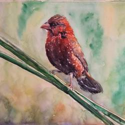 vibrant birds : red avadavat or munia, 12 x 17 inch, vaishali singh,12x17inch,thick paper,paintings,wildlife paintings,animal paintings,paintings for dining room,paintings for living room,paintings for bedroom,paintings for office,paintings for hotel,watercolor,GAL02492636458