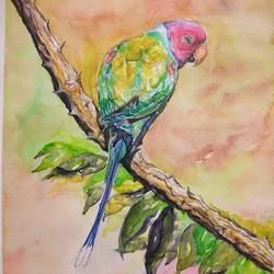 vibrant birds : plum headed parakeet, 12 x 17 inch, vaishali singh,12x17inch,thick paper,paintings,wildlife paintings,animal paintings,paintings for dining room,paintings for living room,paintings for bedroom,paintings for office,paintings for hotel,watercolor,GAL02492636459