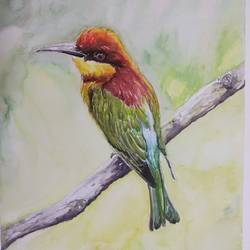 vibrant birds : chestnut headed bee eater, 12 x 17 inch, vaishali singh,12x17inch,thick paper,paintings,wildlife paintings,animal paintings,paintings for dining room,paintings for living room,paintings for bedroom,paintings for office,paintings for hotel,watercolor,GAL02492636460