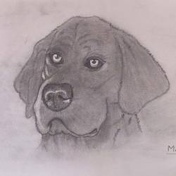 sketch - labrador, 8 x 11 inch, manva bhadang,8x11inch,drawing paper,drawings,figurative drawings,paintings for living room,pencil color,paper,GAL02519436670