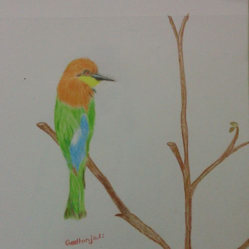 bird, 8 x 11 inch, geethanjali krishna,8x11inch,drawing paper,paintings for living room,paintings for office,paintings for living room,paintings for office,pencil color,GAL02511437000