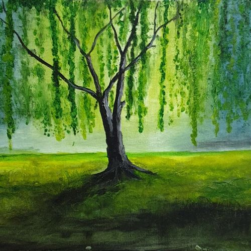weeping willow, 18 x 24 inch, prabhakar barde,18x24inch,canvas board,nature paintings | scenery paintings,paintings for living room,paintings for living room,oil color,GAL02577637170