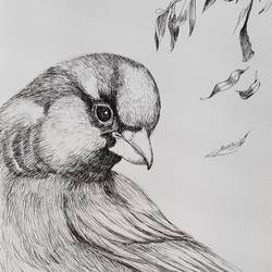 bird, 8 x 12 inch, swastik jawalekar,8x12inch,thick paper,illustration drawings,ink color,GAL02600137506