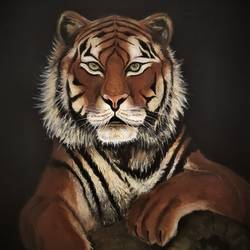 eye of the tiger, 24 x 30 inch, san zac,24x30inch,canvas,paintings,wildlife paintings,still life paintings,nature paintings | scenery paintings,animal paintings,realistic paintings,paintings for dining room,paintings for living room,paintings for office,acrylic color,GAL02627737845