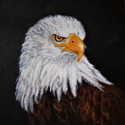 eagle, 8 x 8 inch, san zac,8x8inch,canvas,wildlife paintings,nature paintings | scenery paintings,illustration paintings,animal paintings,paintings for bedroom,paintings for office,paintings for kids room,paintings for bedroom,paintings for office,paintings for kids room,acrylic color,GAL02627737850