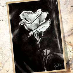 rose , 11 x 6 inch, sarra zakir,11x6inch,paper,paintings,flower paintings,illustration paintings,paintings for office,paintings for hotel,paintings for office,paintings for hotel,charcoal,graphite pencil,paper,GAL02180337902
