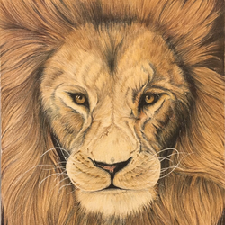 lion portrait , 11 x 15 inch, dhanya pradeep,11x15inch,thick paper,drawings,paintings for living room,portrait drawings,paintings for living room,pencil color,GAL02658638217