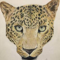 leopard portrait, 11 x 15 inch, dhanya pradeep,11x15inch,thick paper,drawings,portrait drawings,paintings for living room,pencil color,paper,GAL02658638218