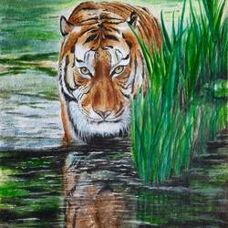 tiger on the prowl, 11 x 15 inch, vasantha dasarath,11x15inch,handmade paper,paintings,wildlife paintings,nature paintings | scenery paintings,paintings for dining room,paintings for living room,paintings for bedroom,paintings for office,paintings for kids room,paintings for hotel,paintings for kitchen,paintings for school,watercolor,GAL02659238225