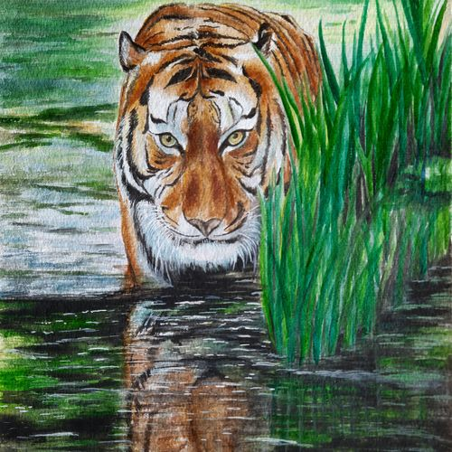 tiger on the prowl, 11 x 15 inch, vasantha dasarath,11x15inch,handmade paper,paintings,wildlife paintings,nature paintings   scenery paintings,paintings for dining room,paintings for living room,paintings for bedroom,paintings for office,paintings for kids room,paintings for hotel,paintings for kitchen,paintings for school,watercolor,GAL02659238225