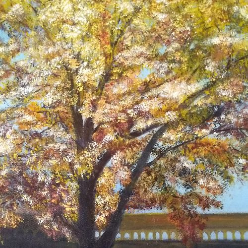 maple tree in fall, 14 x 20 inch, jugnu bakshi,14x20inch,canvas,paintings,landscape paintings,paintings for living room,fabric,oil color,GAL0969338229
