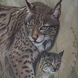 lynx and her baby , 16 x 24 inch, irina  nagill ,16x24inch,canvas,paintings,wildlife paintings,animal paintings,realistic paintings,paintings for living room,paintings for office,paintings for kids room,oil color,GAL02689138445