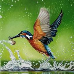 kingfisher , 9 x 12 inch, irina  nagill ,9x12inch,canvas,paintings,wildlife paintings,nature paintings | scenery paintings,animal paintings,realistic paintings,water fountain paintings,paintings for living room,paintings for office,paintings for kids room,oil color,GAL02689138452