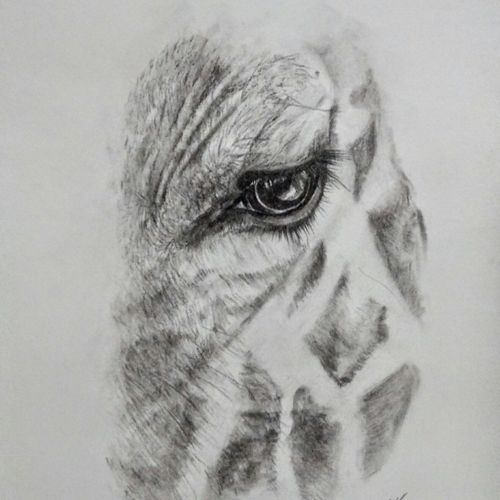 close up1, 8 x 12 inch, arpana d,fine art drawings,paintings for living room,paper,charcoal,8x12inch,GAL09643847