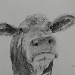 close up2, 8 x 12 inch, arpana d,fine art drawings,paintings for living room,animal paintings,paper,charcoal,8x12inch,GAL09643848