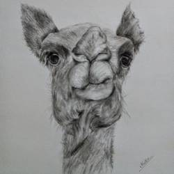 close up3, 8 x 12 inch, arpana d,fine art drawings,paintings for living room,animal paintings,paper,charcoal,8x12inch,GAL09643854