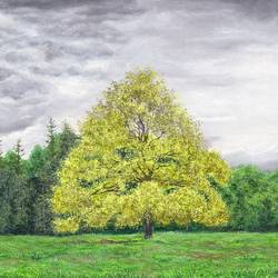yellow tree, 18 x 14 inch, pushpendra singh mandloi,18x14inch,canvas,paintings,nature paintings | scenery paintings,photorealism paintings,realistic paintings,acrylic color,oil color,GAL0726238589