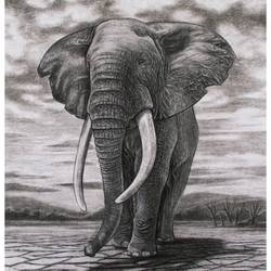 sketch of hathi by charcoal pencil, 11 x 16 inch, manash kalita,11x16inch,ivory sheet,drawings,realism drawings,paintings for dining room,paintings for living room,paintings for bedroom,paintings for office,charcoal,GAL02342138792