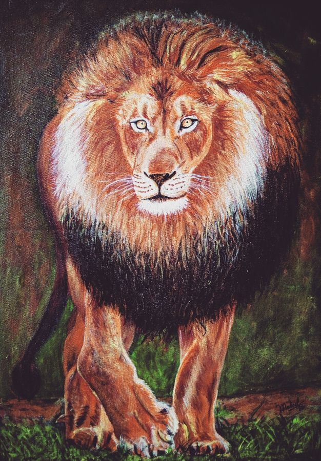 lion, 15 x 21 inch, mehul boricha,15x21inch,canvas,paintings,wildlife paintings,animal paintings,paintings for dining room,paintings for living room,paintings for office,paintings for hotel,paintings for school,acrylic color,GAL02737738892