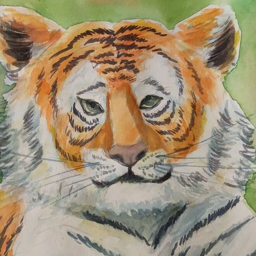 portrait of a tiger , 10 x 6 inch, ajay anand,10x6inch,cartridge paper,paintings,wildlife paintings,paintings for dining room,paintings for living room,paintings for office,paintings for kids room,paintings for hotel,paintings for school,watercolor,GAL01783939275