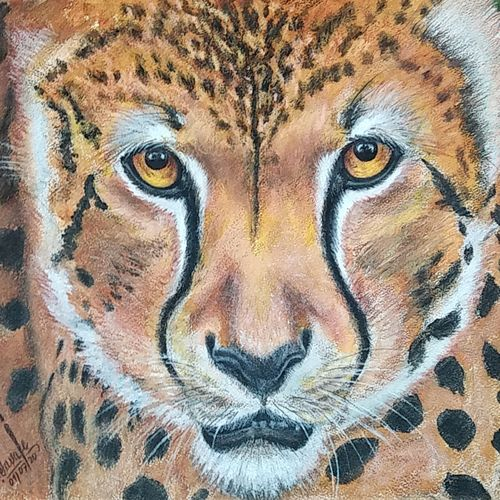 cheeta, 23 x 18 inch, shyam savale,23x18inch,thick paper,paintings,animal paintings,paintings for living room,paintings for office,paintings for hotel,paintings for living room,paintings for office,paintings for hotel,acrylic color,mixed media,paper,GAL02771239280
