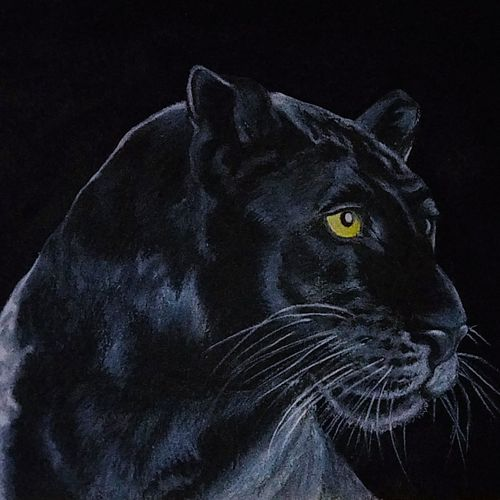 black leopard, 20 x 14 inch, shyam savale,20x14inch,thick paper,paintings,wildlife paintings,animal paintings,paintings for dining room,paintings for living room,paintings for office,paintings for hotel,acrylic color,mixed media,pastel color,GAL02771239340