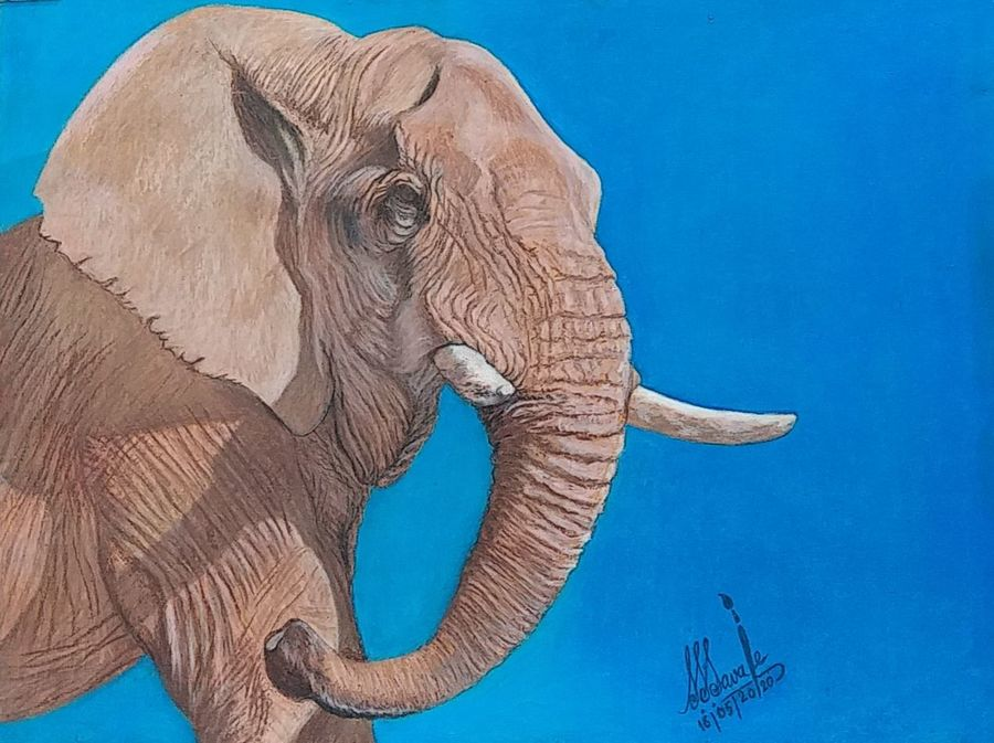 african elephant, 21 x 16 inch, shyam savale,21x16inch,thick paper,paintings,wildlife paintings,animal paintings,paintings for dining room,paintings for living room,paintings for office,paintings for hotel,paintings for school,acrylic color,mixed media,pastel color,GAL02771239341