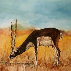 wildlife, 17 x 13 inch, uday bhan  singh,wildlife paintings,paintings for living room,animal paintings,canson paper,watercolor,17x13inch,GAL014333942